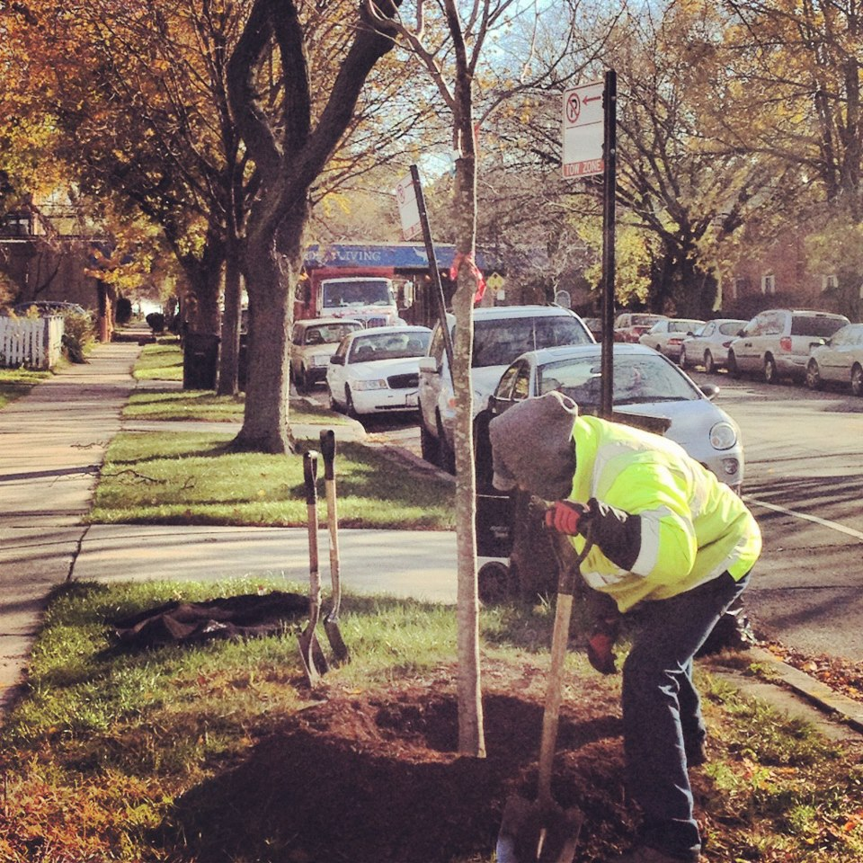 Image for More Trees for Rogers Park